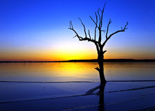 Albero e lago fotografie stock
