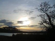 Albero e lago Immagini Stock