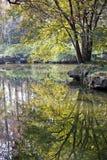 Albero e lago di autunno in lago ad ovest Fotografia Stock