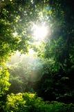 Albero e luce solare Fotografia Stock Libera da Diritti