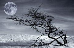 Albero e luna piena secchi Fotografia Stock Libera da Diritti