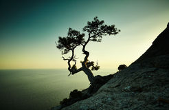 Albero e mare al tramonto Paesaggio della Crimea Immagini Stock Libere da Diritti