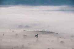Albero e montagna del coperchio della foschia di mattina Fotografie Stock