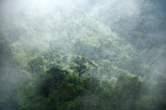 Albero e montagna del coperchio della foschia di mattina Fotografia Stock Libera da Diritti