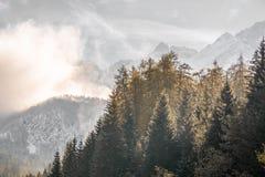 Albero e nebbia Fotografia Stock Libera da Diritti