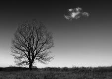 Albero e nube nel nero Fotografie Stock Libere da Diritti