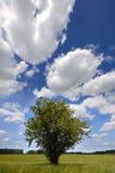 Albero e paesaggio Immagini Stock