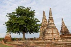 Albero e pagoda Fotografie Stock