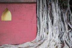Albero e parete Fotografie Stock