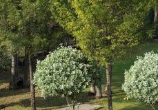 Albero e pianta alta nell'alta vista del giardino con luce solare Fotografie Stock Libere da Diritti