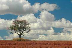 Albero e piantagione Fotografie Stock Libere da Diritti