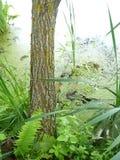 Albero e piante verdi di estate in uno stagno Fotografie Stock Libere da Diritti