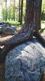 Albero e pietra fotografia stock