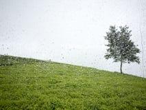 Albero e pioggia Fotografie Stock