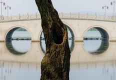 Albero e ponte Fotografie Stock