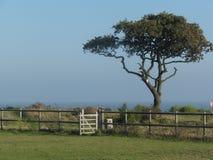 Albero e portone su un'isola di Essex Fotografia Stock
