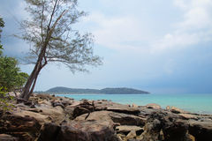 Albero e radici a Koh Rong Island Immagini Stock Libere da Diritti