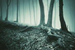 Albero e radici sulla terra in una foresta scura fotografia stock libera da diritti