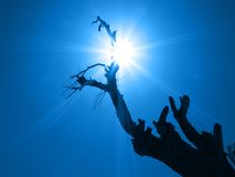 Albero e raggi di sole della siluetta Fotografia Stock Libera da Diritti