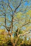 Albero e sole Fotografia Stock