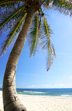 Albero e spiaggia di noce di cocco Fotografie Stock Libere da Diritti