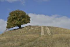 Albero e strada campestre sopra la collina in autunno in anticipo Fotografie Stock Libere da Diritti