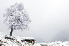 Albero e strada soli in nebbia alla montagna Fotografia Stock
