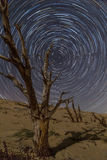 Albero e tracce petrificati della stella sopra le dune di Tarifa Fotografie Stock Libere da Diritti