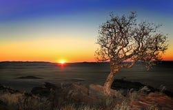Albero e tramonto nei precedenti Immagini Stock