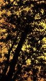 Albero e tramonto nei precedenti Fotografia Stock