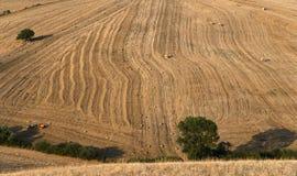 Albero e un granulo dei campi con la balla Fotografie Stock Libere da Diritti