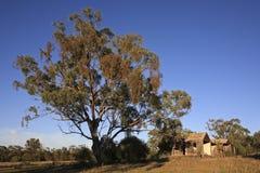 Albero e vecchia baracca Fotografie Stock