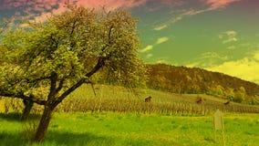 Albero e vigna di fioritura Fotografia Stock