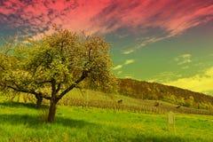 Albero e vigna di fioritura Fotografia Stock Libera da Diritti