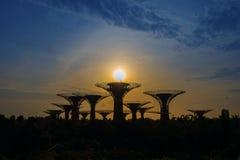 Albero eccellente in giardino dalla baia, Singapore Fotografie Stock Libere da Diritti