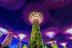Albero eccellente in giardino dalla baia, Singapore Fotografia Stock