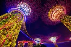 Albero eccellente in giardino dalla baia, Singapore Fotografia Stock Libera da Diritti