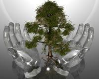 Albero ecologico verde in mani di vetro sulla parte posteriore di grey Fotografia Stock Libera da Diritti