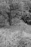 Albero ed erba in bianco e nero Immagini Stock