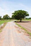 Albero ed il riso del campo al marciapiede Fotografia Stock Libera da Diritti