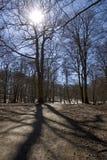 Albero ed ombra Fotografia Stock