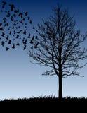 Albero ed uccelli Fotografia Stock Libera da Diritti
