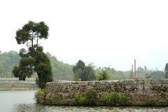 Albero elefantesco Immagine Stock