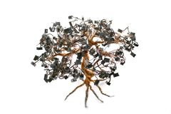 Albero elettronico dei bonsai Fotografia Stock