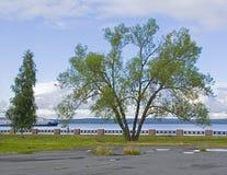 Albero enorme sulla banchina della città Immagine Stock