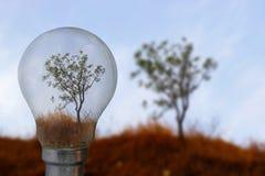 Albero, erba asciutta e cielo blu in una lampadina fotografia stock