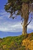 albero erboso del pendio di collina Immagini Stock