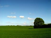 albero favorito Fotografie Stock Libere da Diritti
