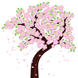 Albero in fiore pieno Fotografie Stock