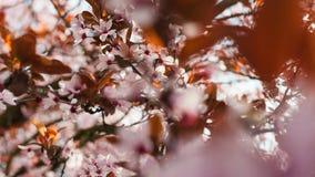 Albero in fioritura fotografia stock libera da diritti